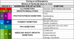 Figure 2. Mimics of herbicide injury to corn during or at emergence.